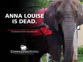 We Mourn the Loss of Anna Louise.