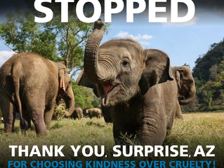 We won! No elephants in Surprise, AZ!