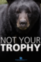 Bear__Trophy_Hunting__Poster_SMALL_jpeg_