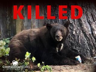 Save Nevada Bears - Act Now!