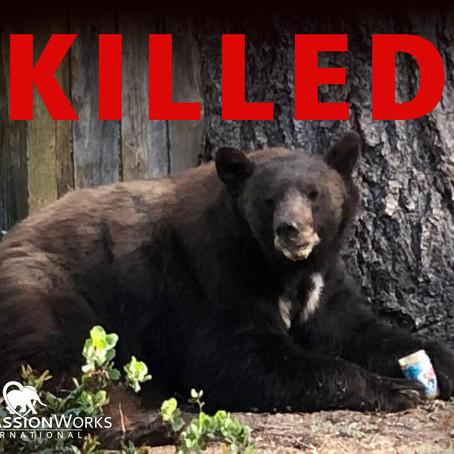 Save Nevada Bears - Act Now!