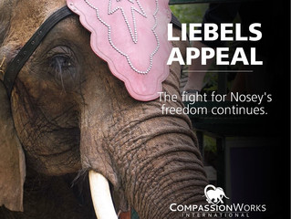 Nosey's Case Goes Back to Court