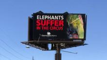 Colorado Bans Animal Abusing Circuses!
