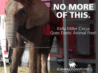 Kelly Miller Circus to go Exotic-Animal Free