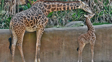 March & April 2021 Zoo Incident Report