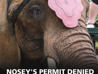 Hope for Nosey?