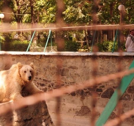 Regarding Kabul Zoo