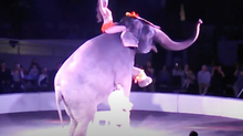 Which Circuses Still Use Animals?