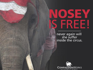 NOSEY IS FREE!