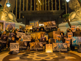 Cities around the World RALLY for CECIL!