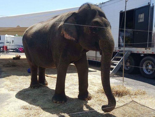 Kelly Miller Circus...another one bites the dust?