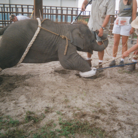 Ringling Elephants to Have a New Home