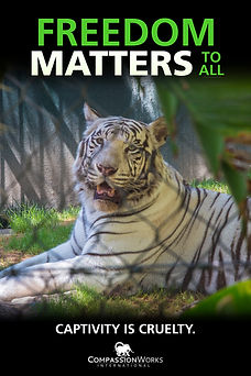 FREEDOM MATTERS TIGER POSTER 24 36.JPEG