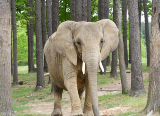 Victory For Nosey!