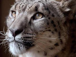 Zoo Incidents November 2018