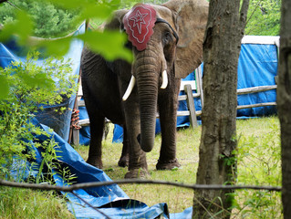Complaint filed on behalf of Nosey