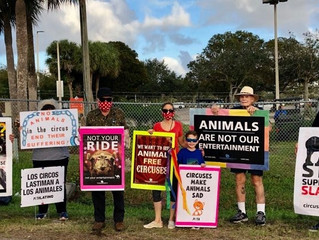 West Palm Beach Circus Protest! Thank You!