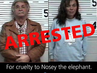 Nosey's Day in Court, and a Big Arrest!