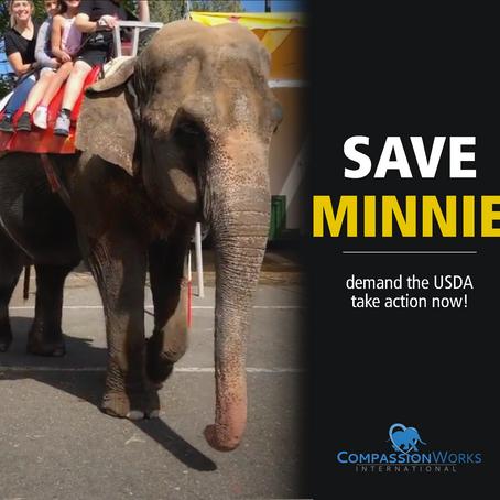 Save Minnie