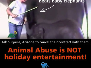 Arizona town schedules event using abused elephants!