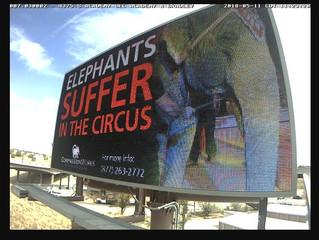 Anti-Animal Circus Campaign in Colorado