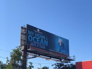 Anti-dolphin captivity campaign in Gulfport, MS