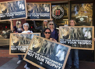 2020 Worldwide Rally Against Trophy Hunting