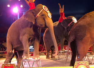 Circus World Cancels Live Circus Shows