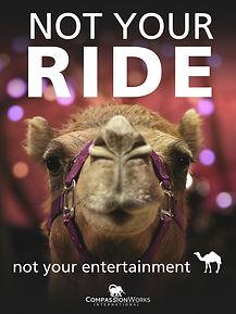 Camel.Poster.jpeg
