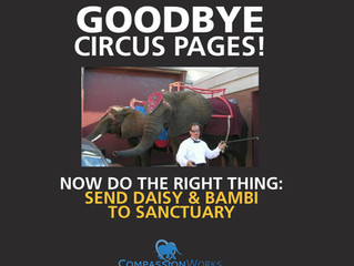 Circus Pages has CLOSED