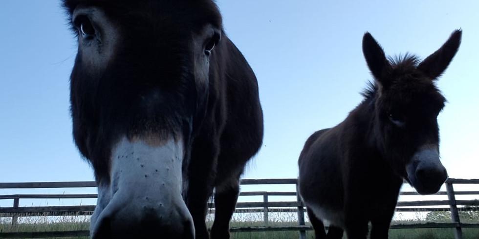 Date Deinen Esel