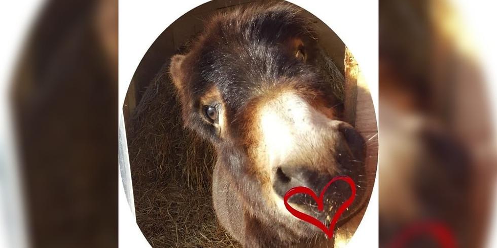 Valentinstags-Eselwanderung