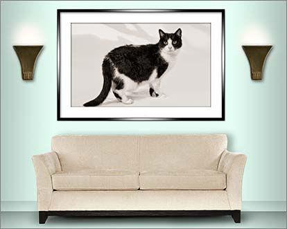 Room set showing a cat portrait © Portraits by Hart
