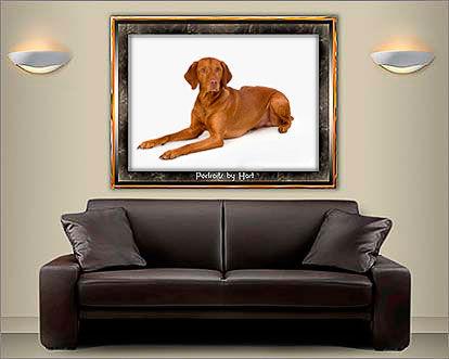 Romm set showing a dog portrait © Portraits by Hart