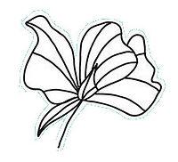 flower1_white.jpg