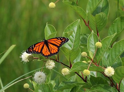 butterfly-3355757_960_720.jpg