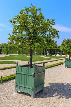 Orangerais Versailles