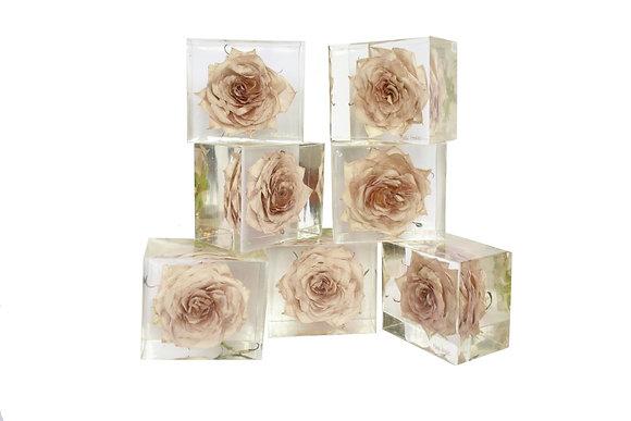Menta Roses