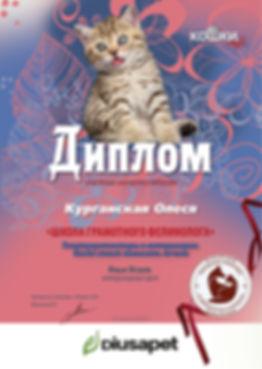 Вебинар 06 16 29 кошки 8 Курганская Олес