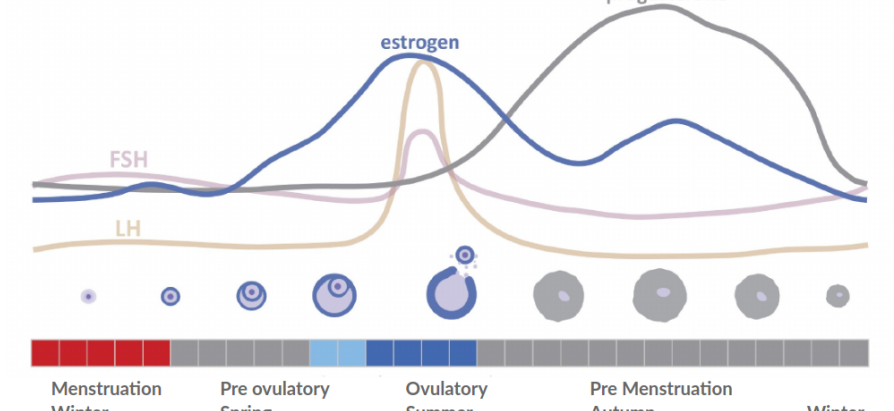 Introduction to your reproductive hormones