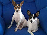 Charbon dogs 12.jpg