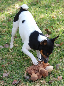 Jazzman and his teddy