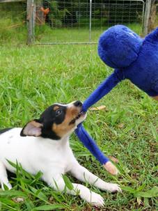 Nudimah dogs 13.jpg