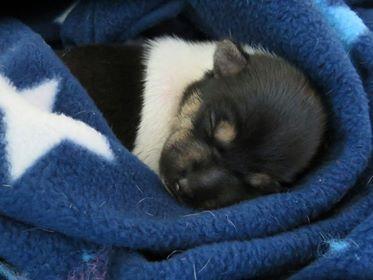 Nala's pup.jpg