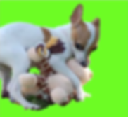 pup image.png