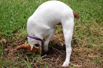 Jono digging