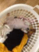 Roxy in her basket.jpg