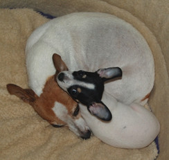 Lady & pup