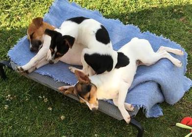 Nudimah pups resting