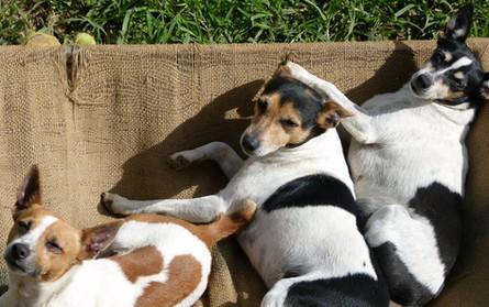 Nudimah dogs 22.jpg